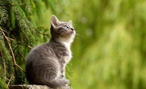 seguro gatos