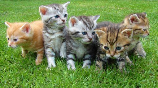 Seguro médico para gatos